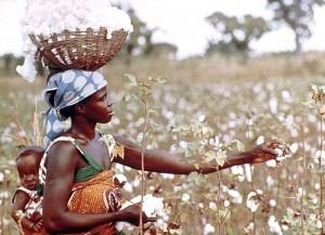 640_464_cotton-farmer-300x217